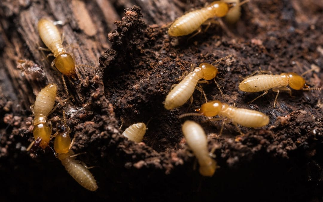 6 Signs You Have Termites in Your Home