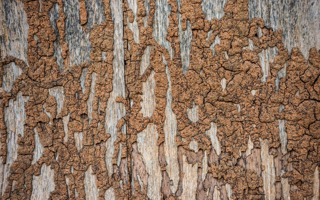 preventing termites in the home